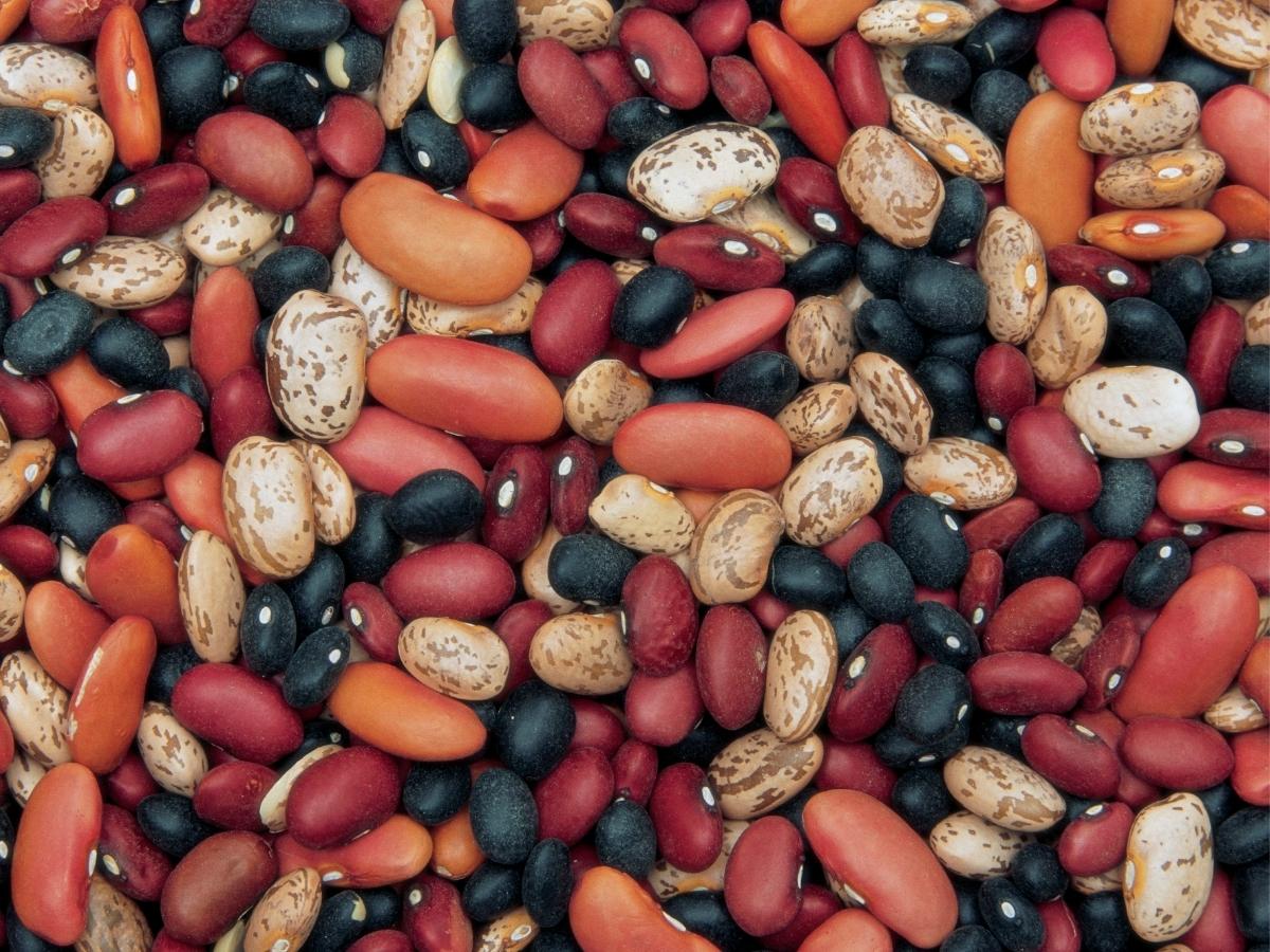 Amaël MALLEMONT Pôle Santé les Pléiades protéine végétale Haricots secs