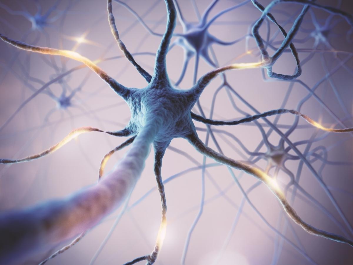Système nerveux Amaël MALLEMONT Pôle Santé les Pléiades huiles essentielles